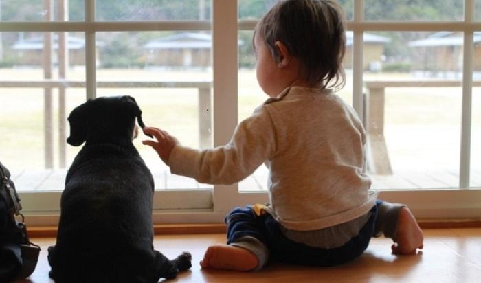犬と子供が並ん仲良く外を見ている様子