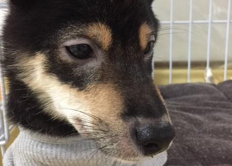 目の周りの毛が抜けた愛犬の写真